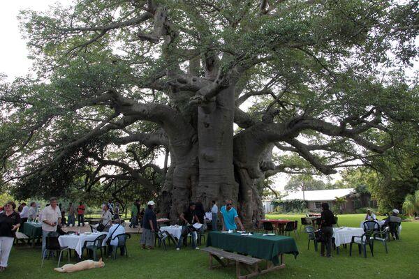 Big Baobab Pub