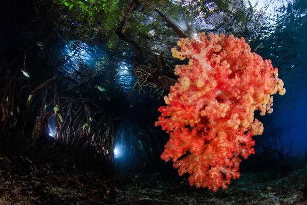 Работа победителя конкурса фотографии 2018 Ocean Art Underwater Photo Contest