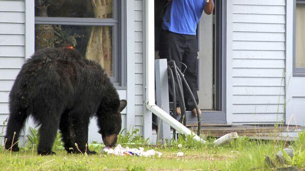 Медведь во дворе дома в Анкоридже, Аляска