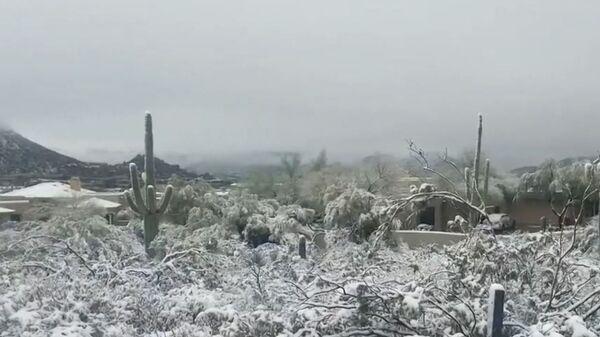 Кактусы в снегу: на штат Аризона обрушился сильнейший снегопад