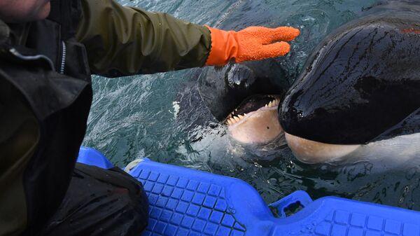 Центр адаптации морских животных в бухте Средняя Приморского края