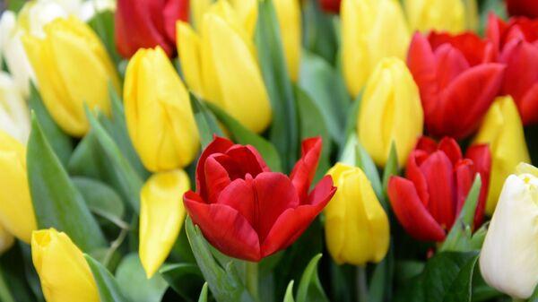 Продажа цветов к 8 Марта