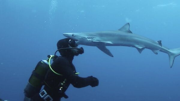 Дайвер встречается лицом к лицу с акулой