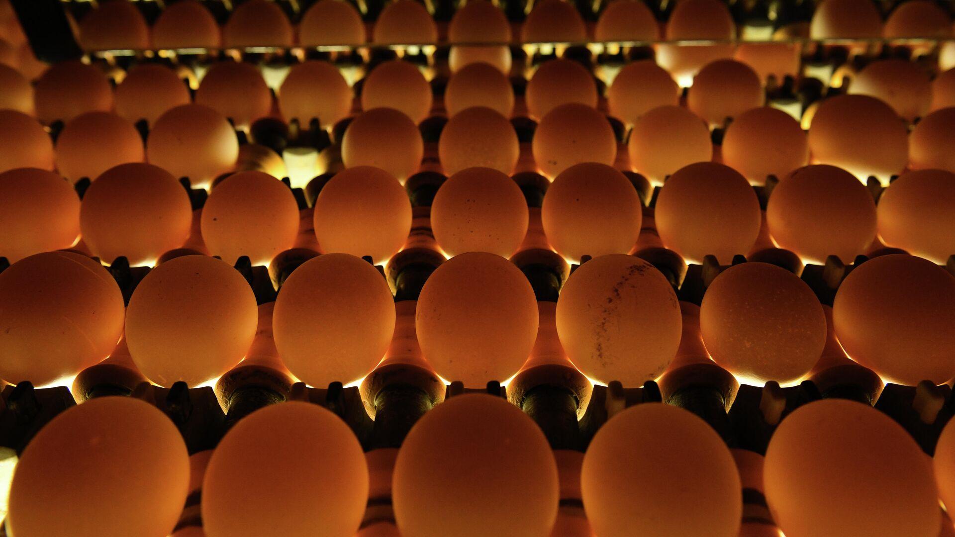 Проверка качества яиц на овоскопе на участке сортировки и упаковки на птицефабрике Ново-Барышевская в Новосибирской области - РИА Новости, 1920, 25.09.2020
