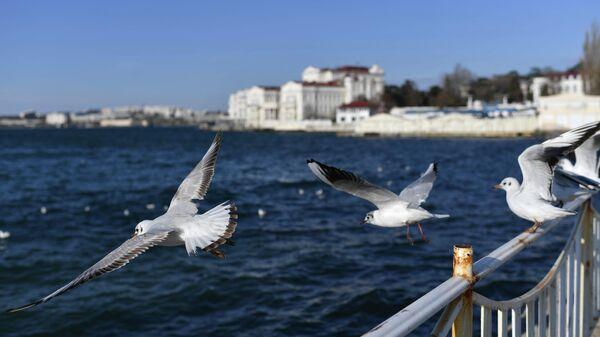 Чайки в Арт-бухте в Севастополе