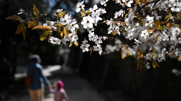 Цветущее дерево в Воронцовском парке в Алупке