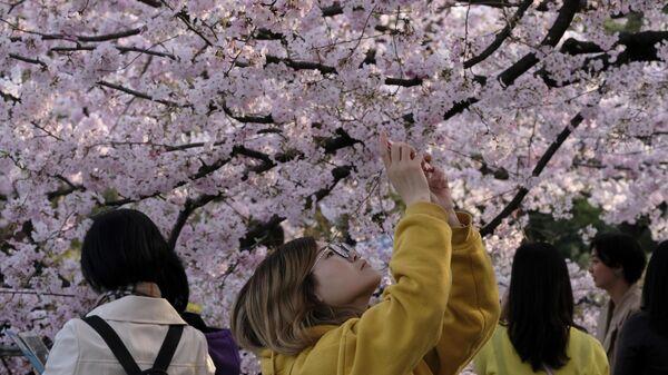 Девушки фотографируют сакуру в Токио, Япония