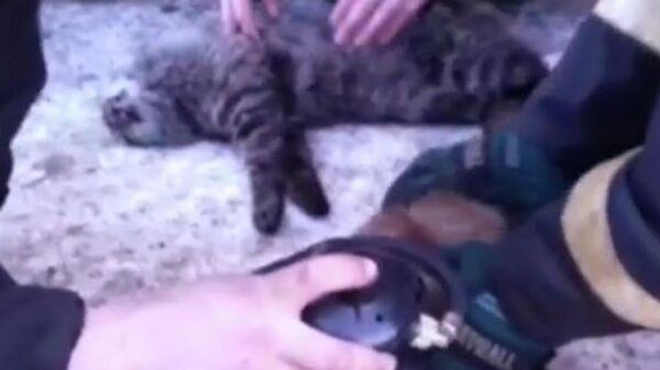Скриншот видео, где сотрудники МЧС делают искусственное дыхание котам