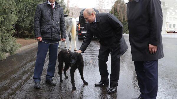 Президент РФ Владимир Путин с подаренной президентом Киргизии Сооронбаем Жээнбековым собакой породы тайган в Бишкеке