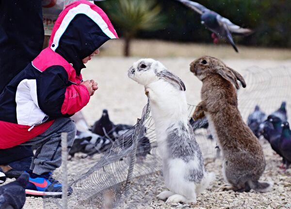 Ребенок рассматривает кроликов в природном орнитологическом парке в Сочи