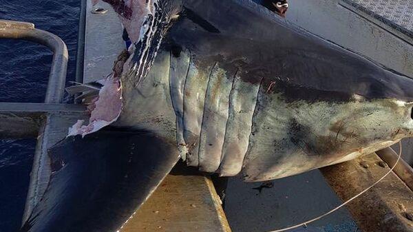 Рыбак Джейсон с выловленной им с головой акулы у берегов австралийского города Бермаги