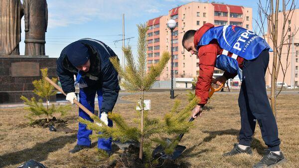 Волонтеры сажают ели в Кемерово в честь полного перехода кемеровской области на цифровое телевещание. 6 апреля 2019