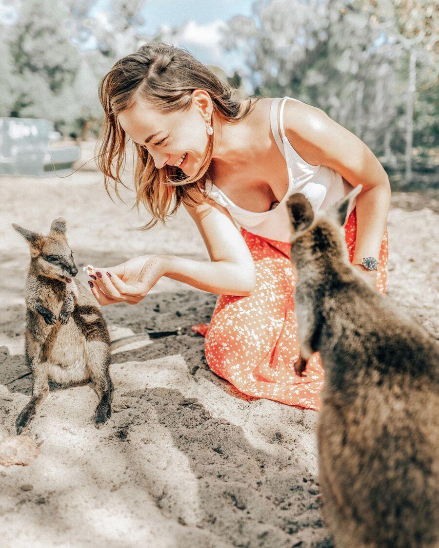 Австралия. В заповеднике Коуну Коала Парк