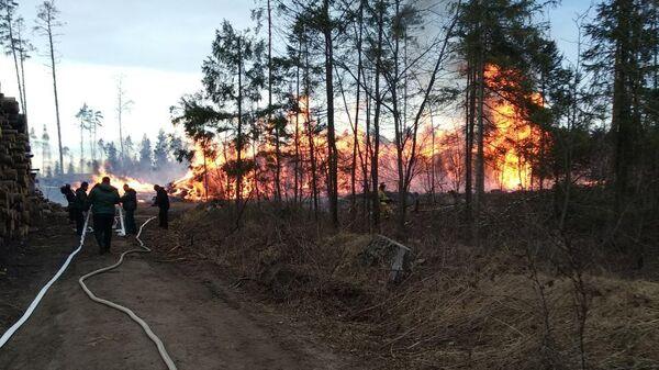 Пожар в Лосином острове. 14 апреля 2019