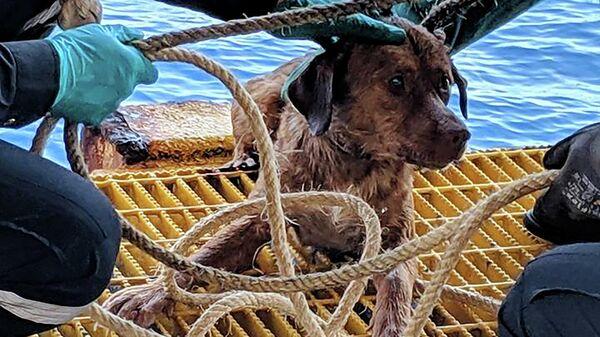 Cобака, спасенная у побережья Сиамского залива