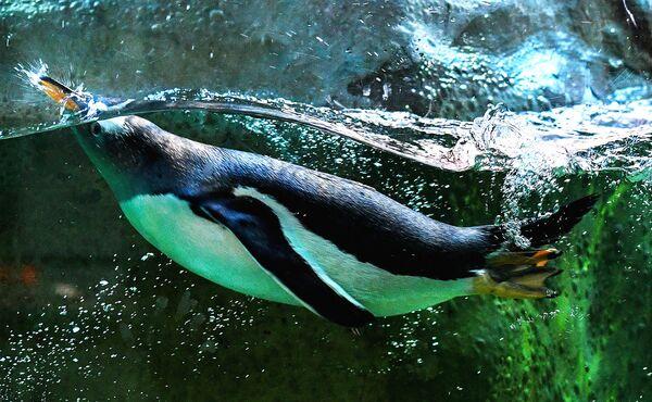 Пингвин в Московском зоопарке