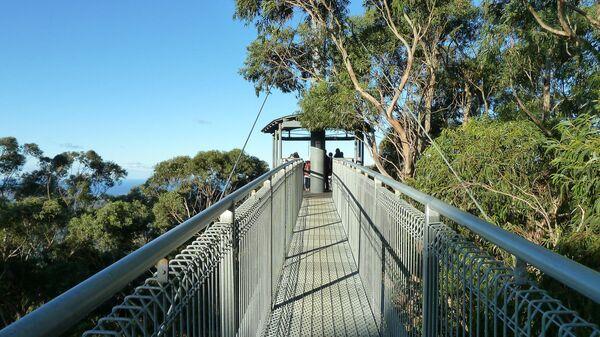 Прогулка над деревьями в Австралии