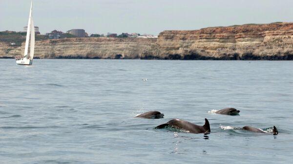 Дельфины в Севастополе