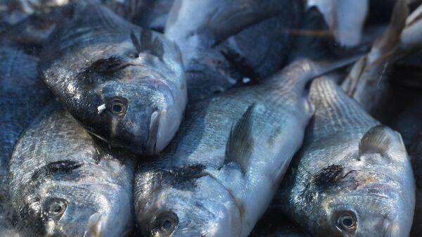 Дорада на прилавке во время фестиваля Рыбная неделя в Москве