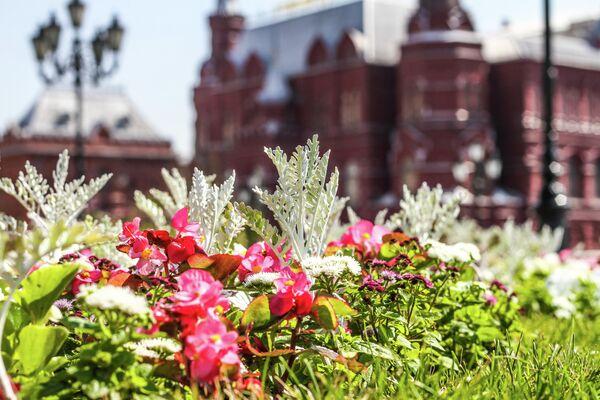 Цветники в Москве