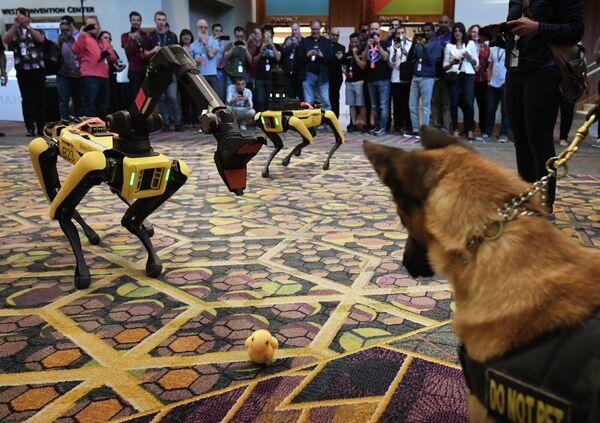 Собака К9 и робот-собака Spot во время конференции Amazon Re:MARS