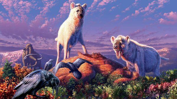 Так художник представил себе гиен, живших на Аляске примерно 1,4 миллиона лет назад