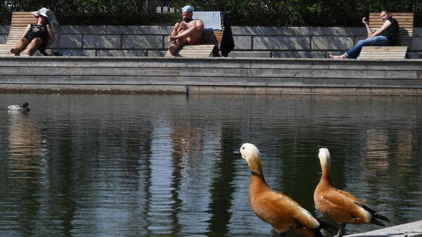 Красные утки в парке Горького в Москве