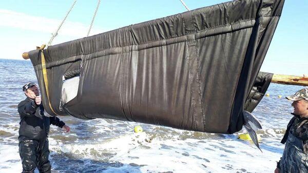 Специалисты завершили выпуск животных, доставленных к мысу Перовского из бухты Средняя