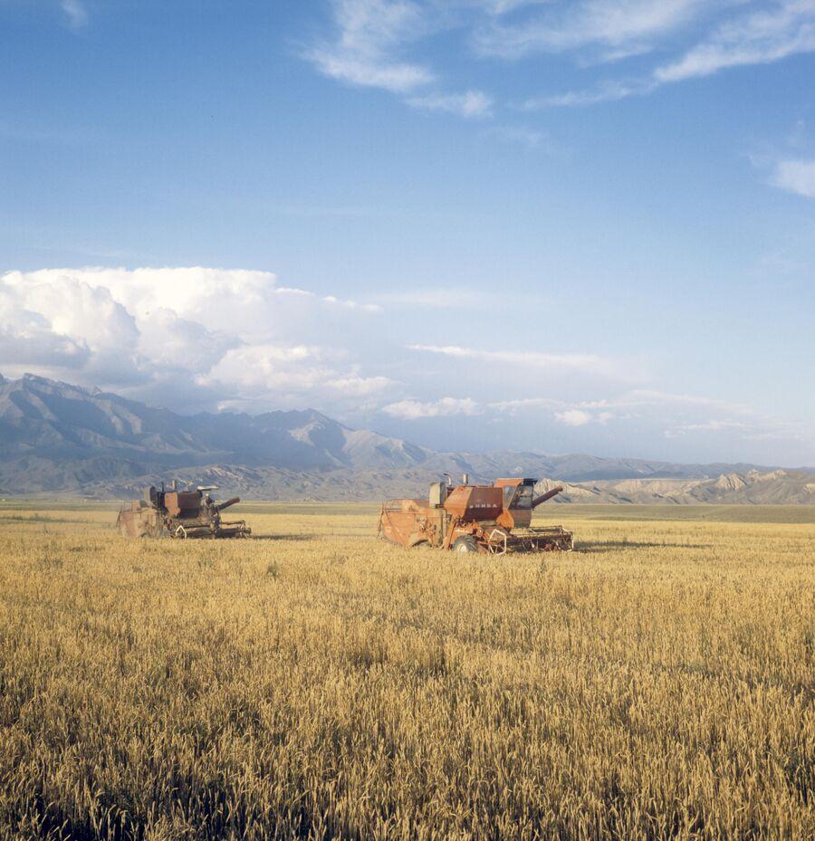 Уборка хлеба на целине. Талды- Курганская область. Казахская ССР