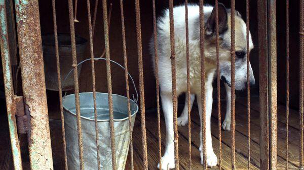 Собака в приюте для бездомных животных в Москве