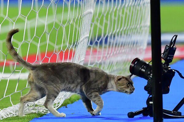 Кот обнюхивает фотоаппарат перед матчем между командами Ганы и Туниса за Кубок африканских наций 2019 в Египте. 8 июля 2019 года