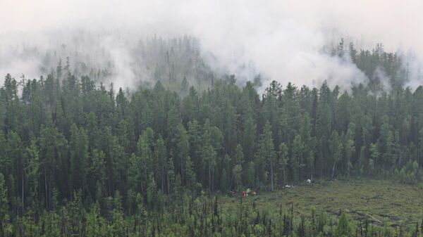 Лесной пожар в Красноярском крае