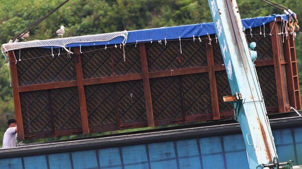 Третий этап выпуска на волю косаток из китовой тюрьмы. 1 августа 2019