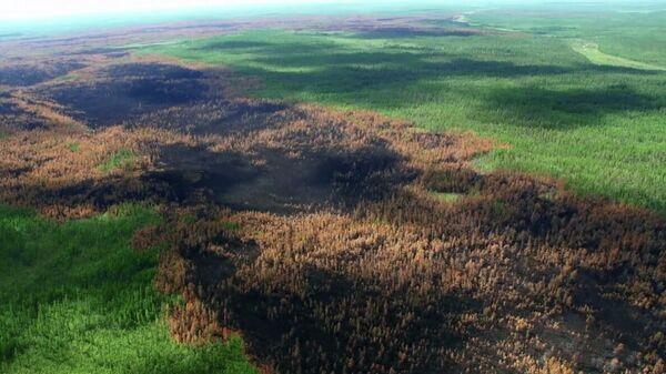 Последствия лесных пожаров в Красноярском крае