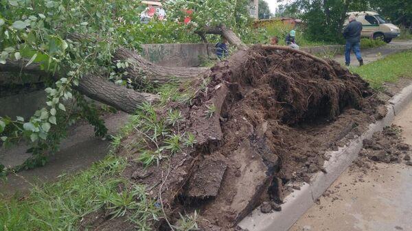Штормовой ветер снес в Перми более 30 деревьев и оборвал сети наружного освещения. 6 августа 2019