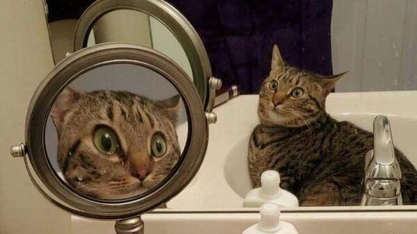 Фотография удивленной кошки, сидящей в раковине напротив двух зеркал