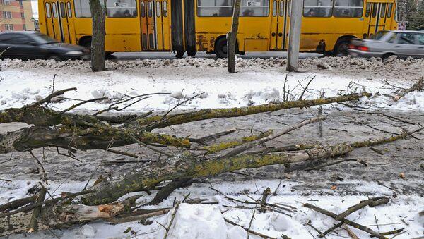 Срубленное дерево, архивное фото