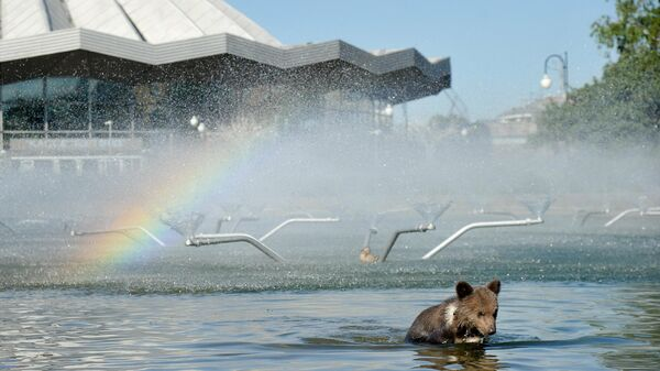 Животные-артисты Большого Московского государственного цирка на проспекте Вернадского перед зданием цирка