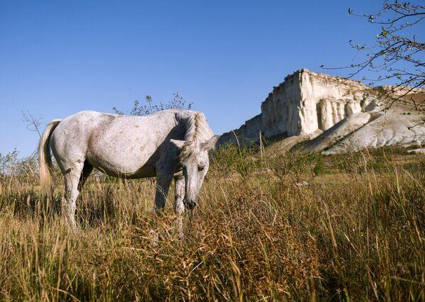 Лошадь пасется возле Белой скалы (Ак-Кая) в Белогорском районе Крыма