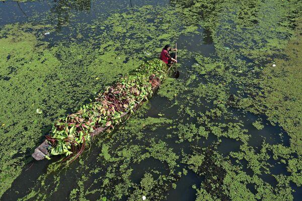 Женщина плывет на лодке сквозь кувшинки на озере Дал в Сринагаре