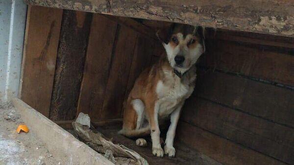 Собака, выжившая в приюте Дружок в Амурской обалсти
