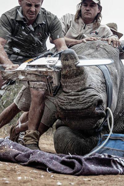 Neville Ngomane. Работа победителя конкурса Environmental Photographer of the Year 2019