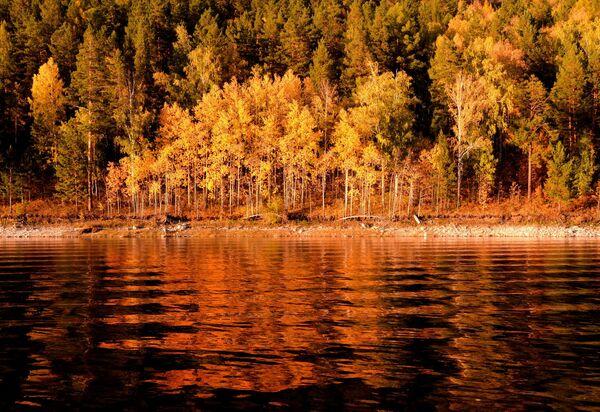 Осенняя сибирская тайга на берегу Бирюсинского залива Красноярского водохранилища