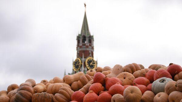 Тыквы на площадке фестиваля Золотая осень на Красной площади