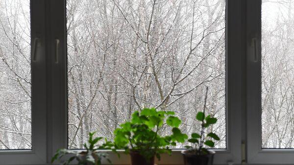 Вид из окна жилого дома на заснеженные ветки деревьев