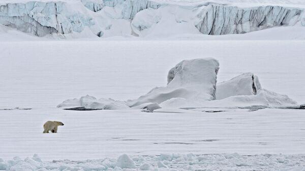 Белый медведь на льдине в Северном ледовитом океане.