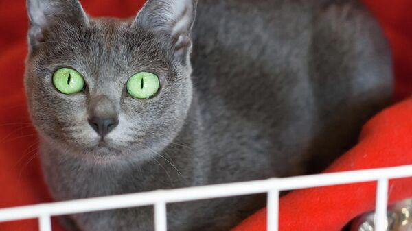 коронавирус кошки как определить
