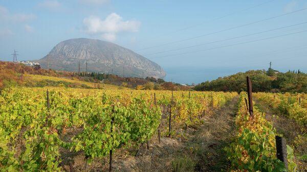 Крым. Виноградники и вид на гору Аю-Даг