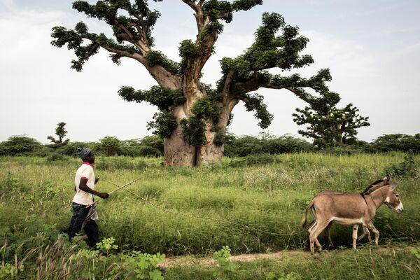 Мужчина на окраине леса Бандиа, Сенегал