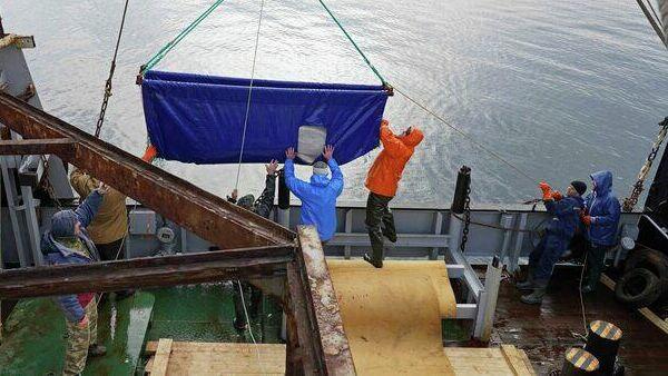 Выпуск белух в Японском море